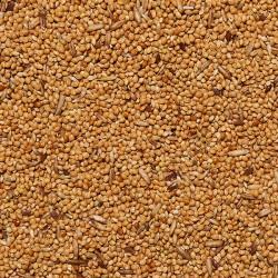ITALMIX COCORITE Mangime per Cocorite sfuso in conf. da 800gr