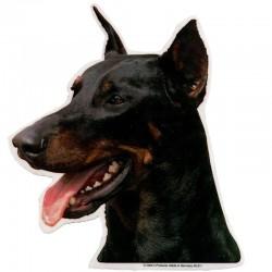 Vetrofania adesiva con cane Dobermann 2 adesivi da 15x15 cm