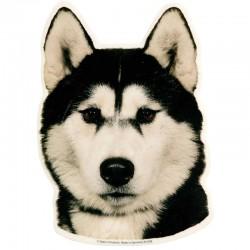 Vetrofania adesiva con cane Husky 2 adesivi da 15x15 cm