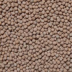 Semi di Pisello Giallo Mangime sfuso in conf. da 800gr