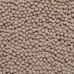 Semi di Pisello Bianco Mangime sfuso in conf. da 800gr