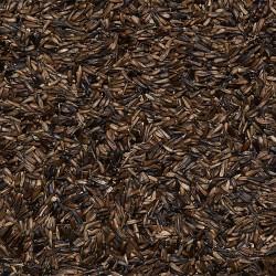 Semi di Girasole Nero Piccolissimo sfusi in conf. da 800gr