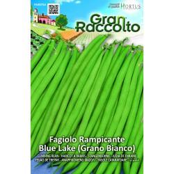 Hortus Gran Raccolto - semi di Fagiolo Blue Lake Grano Bianco Rampicante