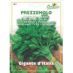 Hortus Ortovivo - semi di Prezzemolo gigante d'Italia