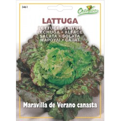 Hortus Ortovivo - semi di lattuga Maravilla de Verano canasta