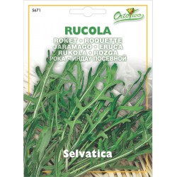 Hortus Ortovivo - semi di Rucola selvatica