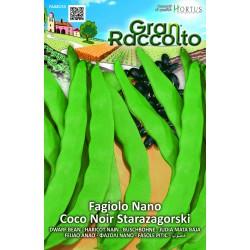 Hortus Gran Raccolto - semi di Fagiolo nano Starazagorski (Grano Nero)