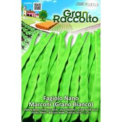 Hortus Gran Raccolto - semi di Fagiolo Nano Marconi (grano bianco)