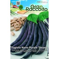 Hortus Gran Raccolto - semi di Fagiolo Nano Purple Teepee