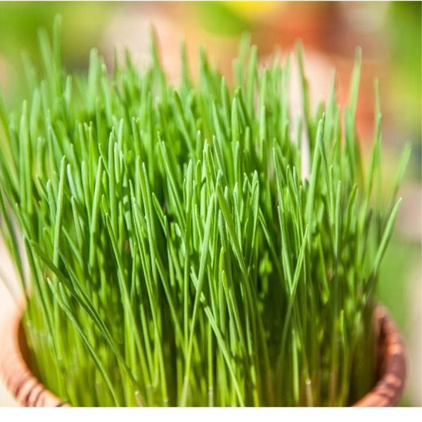 come eliminare il mio erba cipollina dating account regole degli uomini per la datazione