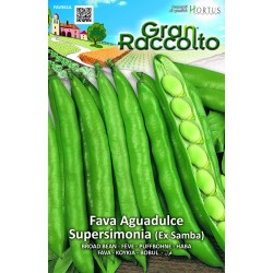 Hortus Gran Raccolto - semi di Fava Aguadulce Supersimonia sel. Samba