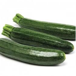 Zucchino Scuro F.1 in Vaschetta da 4 Piante