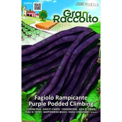 Hortus Gran Raccolto - semi di Fagiolo Rampicante Purple Podded Climbing