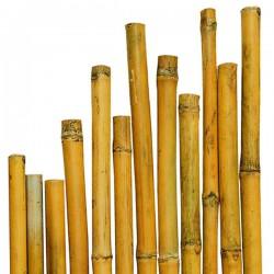 Canna di Bamboo h 2400 x Ø 22-24 mm