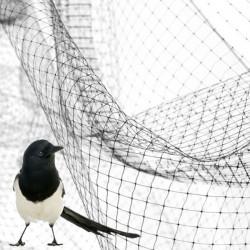 NORTENE Difengreen Rete di protezione contro gli uccelli h 2x5 mt