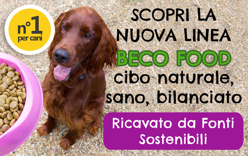 banner Beco Food